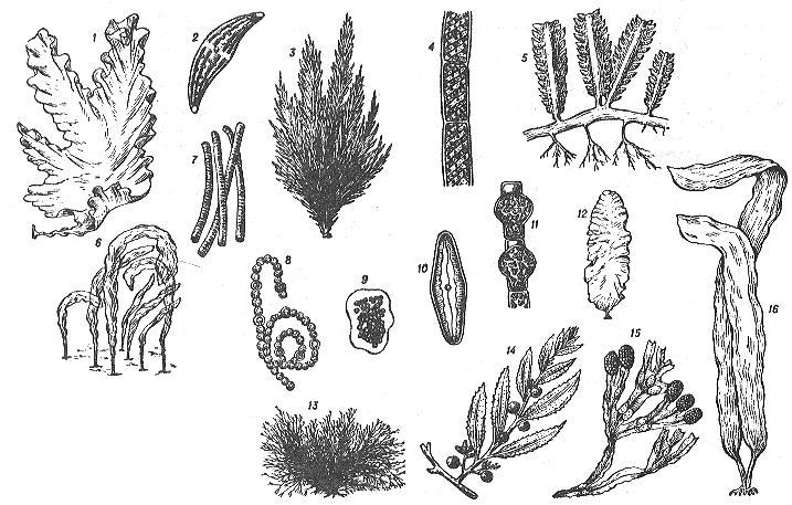 состав планктона для ловли толстолоба